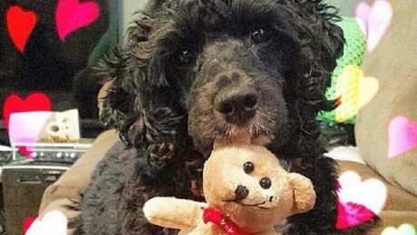24 Dogs Who Want To Be Your Valentine