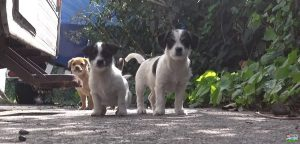 5 Motherless Puppies Rescued From The Streets [VIDEO]