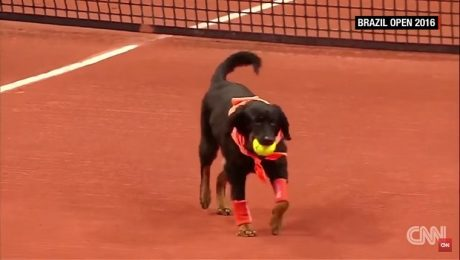 Adorable Shelter Dogs Act As Tennis Ball Boys At The Brazil Open