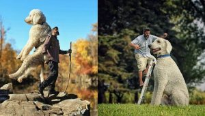 A Photographer Photoshops His Dog To Look Like A Giant