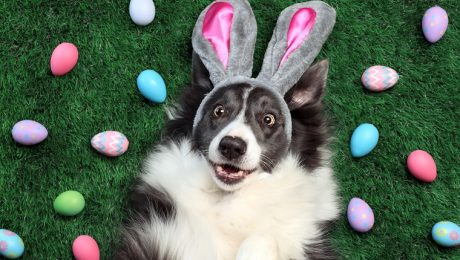 Happy Easter! 9 Dogs Having Their Own Easter Egg Hunts [VIDEOS]