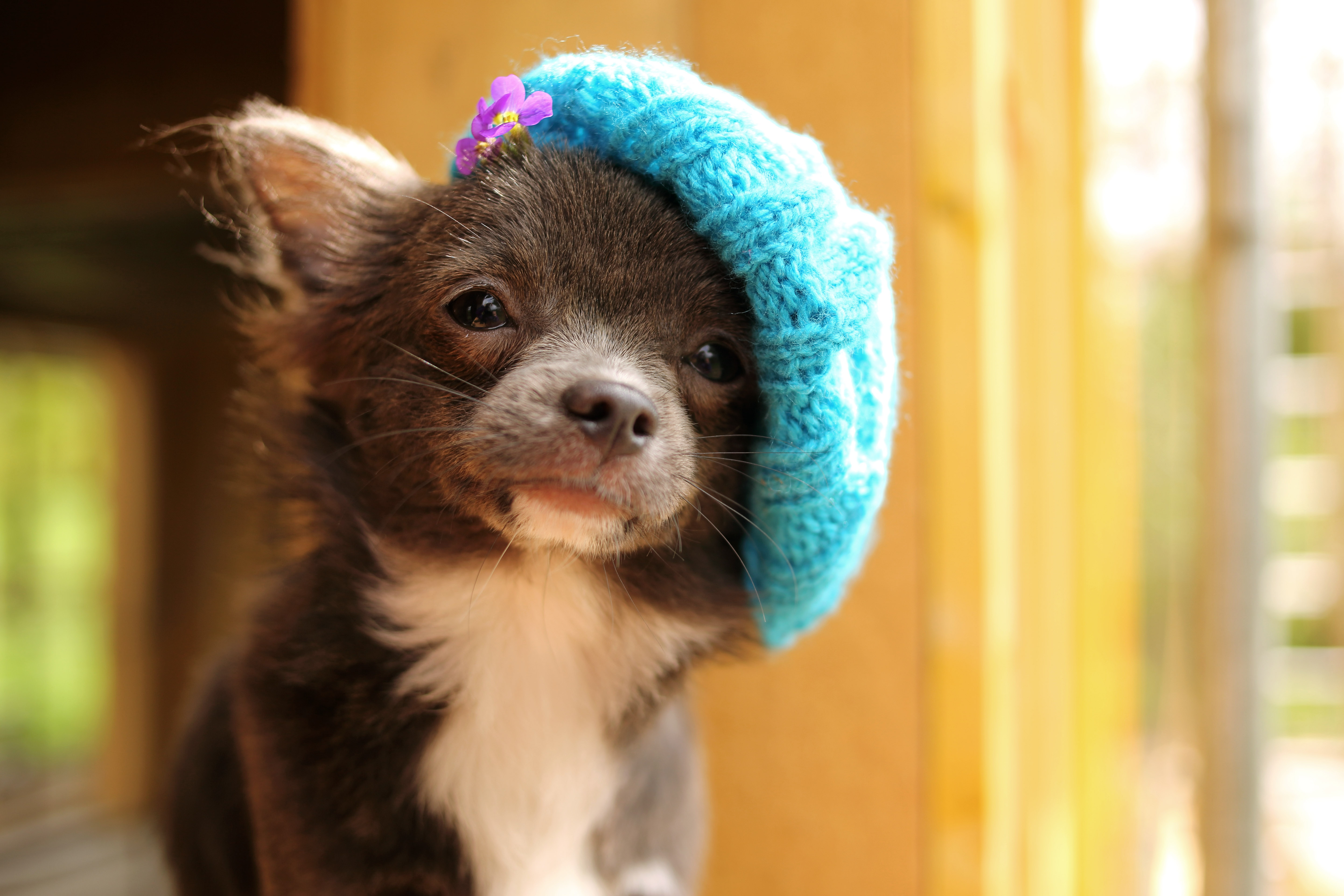 23 adorable dogs in hats gallery   dogtime