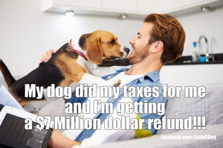 10 Things Your Dog Wants To Buy With Your Tax Refund