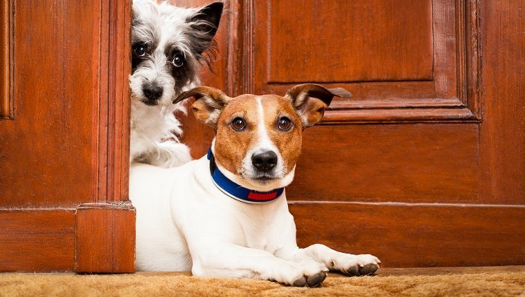 "Two dogs poke their heads through a cracked door with expressions that seem to say, ""Oh my."""