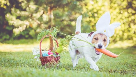 25 Easter Dog And Puppy Pictures To Make You Smile