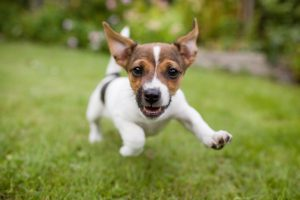 National Puppy Day: 7 Adorably Annoying Things Puppies Do