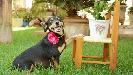 Pregnant Dog's Maternity Pictures Are Beautiful