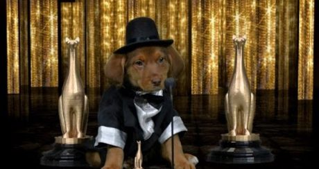 Stephen Colbert Invented The Puppy Oscars WATCH!