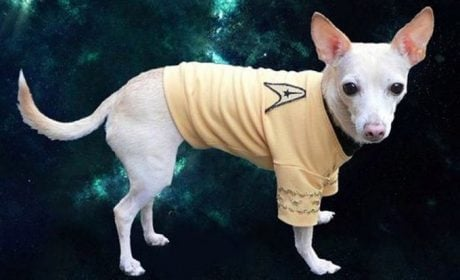 20 Dogs Who Love Star Trek [PICTURE GALLERY]
