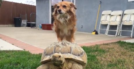 Tortoise Taxi For Dogs [VIDEO]