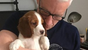 Anderson Cooper's New Welsh Springer Spaniel Puppy Is Adorable