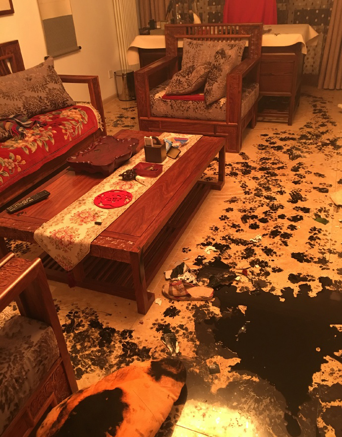Paw prints cover the floor