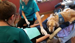 Doggy Dental Assistant Comforts Scared Kids At The Dentist