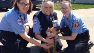 Stray Puppy Chases Down Ambulance, Catches Forever Home & Other Heartwarming Stories