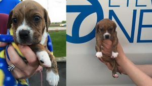 Puppy Found Duct Taped In A Pillowcase And Left In The Rain Gets Rescued