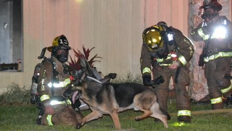 Retired K-9 German Shepherd Dog Helps Firefighters Save Kids From Burning House