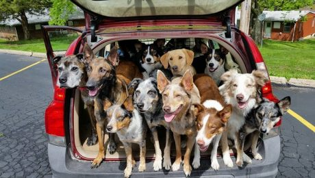 Police Called On Car With 20 Rescue Dogs Riding Inside