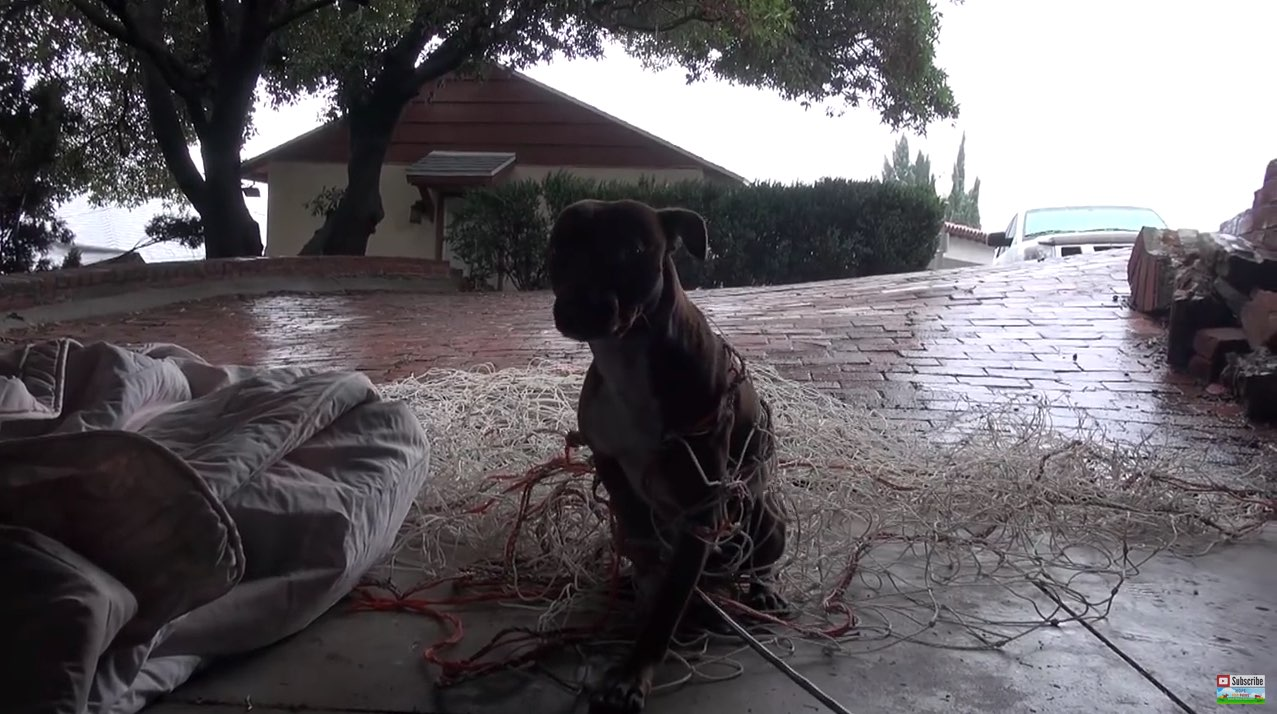 Hope For Paws_ Pit Bull rescue like you have never seen before! (Eden) - YouTube-2
