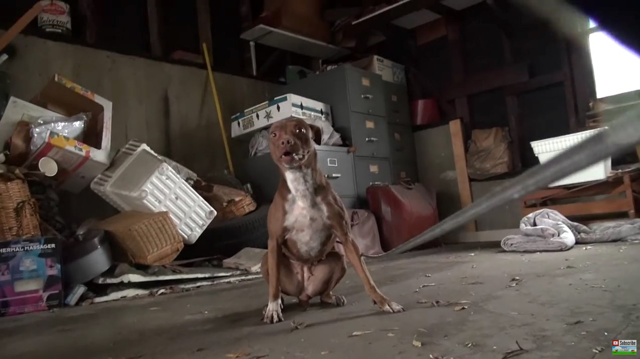 Hope For Paws_ Pit Bull rescue like you have never seen before! (Eden) - YouTube