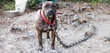 YES! Sentencing Range For Dog Fighting Increases 250%