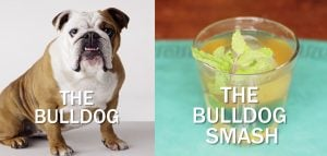 The Bulldog Smash Cocktail Recipe For Bulldog Lovers [VIDEO]