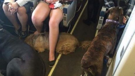 Airlines Allow Residents Fleeing Canadian Wildfire To Bring Their Pets On Board