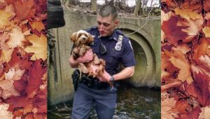 Police Officer Wades Into Drainage Tunnel To Save Trapped Dog