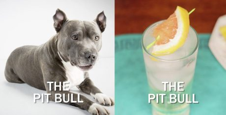 The Pit Bull Cocktail Recipe For Pit Bull Lovers [VIDEO]