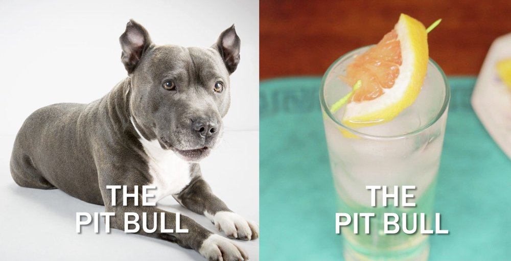 A Pit Bull next to the Pit Bull cocktail