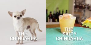 The Salty Chihuahua Cocktail Recipe For Chihuahua Lovers [VIDEO]