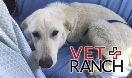 Bad Luck Dog With The Odds Stacked Against Him Saved By Vet Ranch
