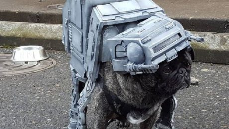 """Pug Crawl"" Celebrates ""Star Wars: The Pug Awakens"""
