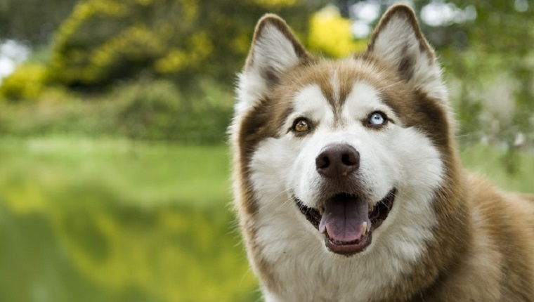 Dogs With Two Different Colored Eyes Names