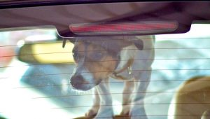 Leaving Your Dog In A Hot Car Could Get You Thrown In Jail Soon