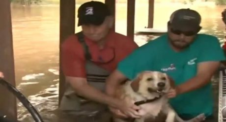 Dog Chained To Front Of House In Texas Flood Waters Up To Her Head [RESCUE VIDEO]