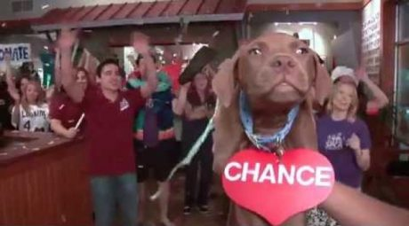 INSPIRING! Take A Chance Adopt A Shelter Pet [VIDEO]