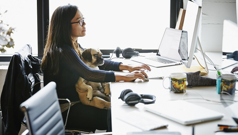 Businesswoman sitting at office workstation working on computer with dog sitting on her lap