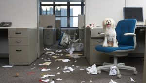 7 Ways To Make Your Office Dog Proof For Take Your Dog To Work Day