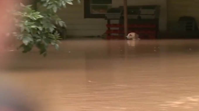 texas-dog-saved-flood-waters