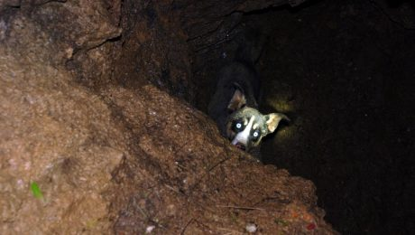 Volunteer Firefighters Rescue Missing Dog From A 30-Foot Sinkhole