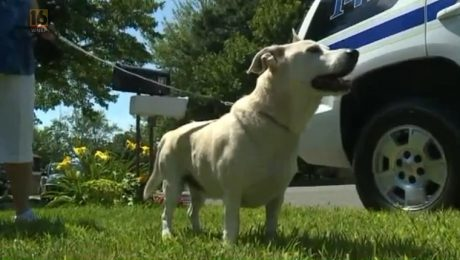 Dog Leads Rescuers To Senior Owner Who Fell In The Woods