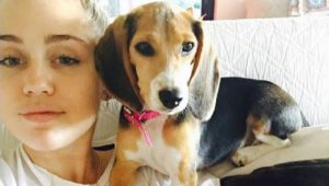 Miley Cyrus Adopts Beagle To Raise Awareness About Animal Testing
