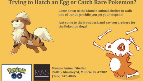 Animal Shelter Recruits Pokemon GO Players To Walk Dogs–And You Can Help, Too!
