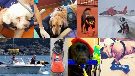 Happy Labor Day: 8 Dogs With The Most Unique Jobs Of 2016