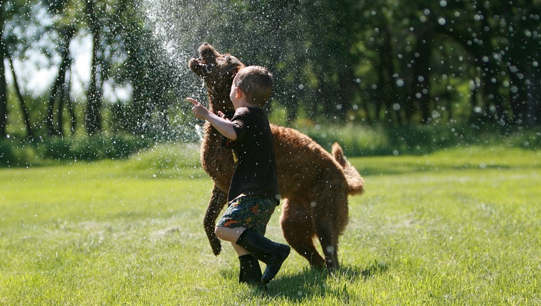 boy and dog running through sprinkler