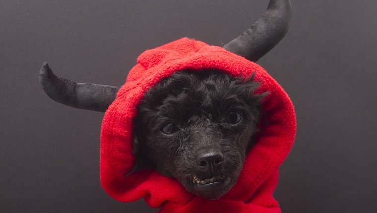 A dog wearing a devil costume