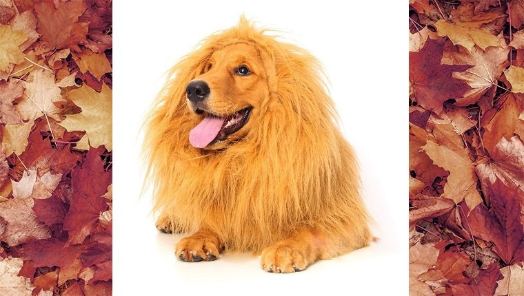 dog-costumes-2016-lion
