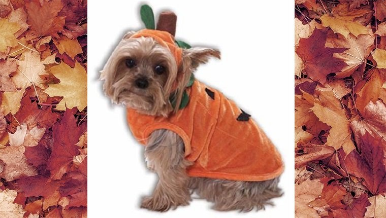 dog-costumes-2016-pumpkin