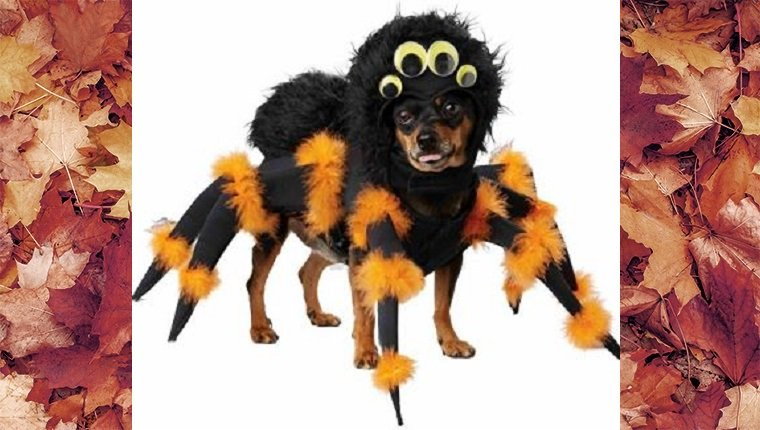 dog-costumes-2016-spider
