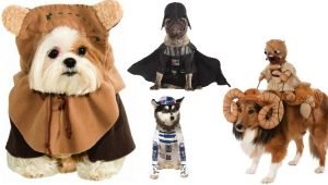 Top 10 Trending Dog Halloween Costumes For 2016